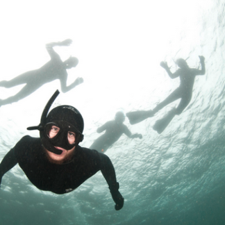 Seal Snorkelling Experience